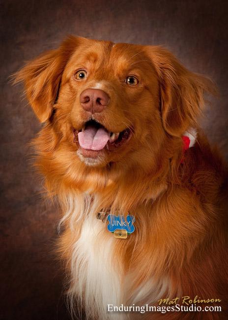 Pet Portraits Photography Dogs