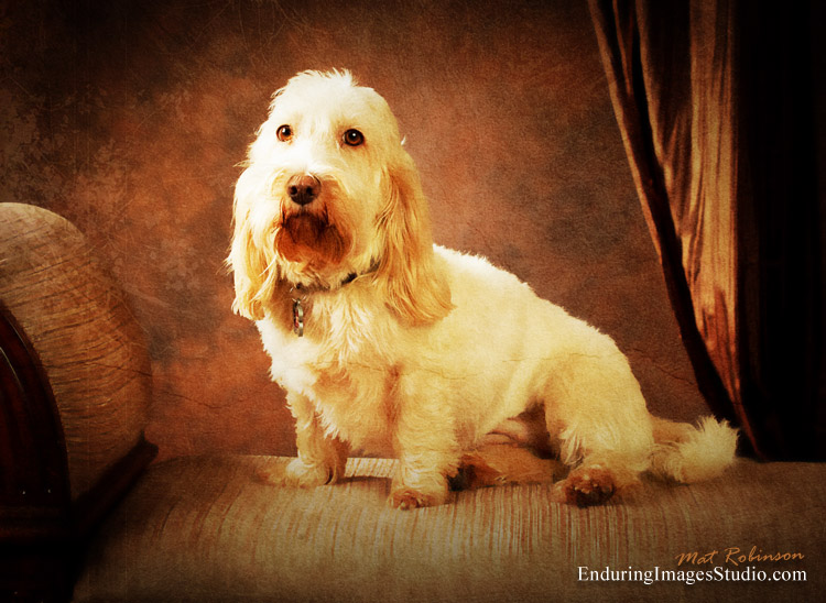 Pet portraits photographer, turns photograph into fine art rennaisance pet painting, Rockaway, Morris County